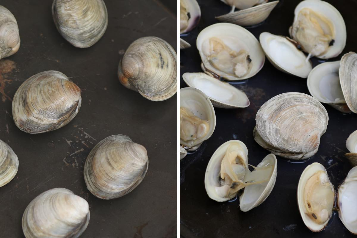 Broiling clams on a rimmed baking sheet until they open
