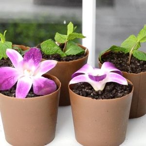 Flower Pot Dirt Cakes are a fun and easy dessert